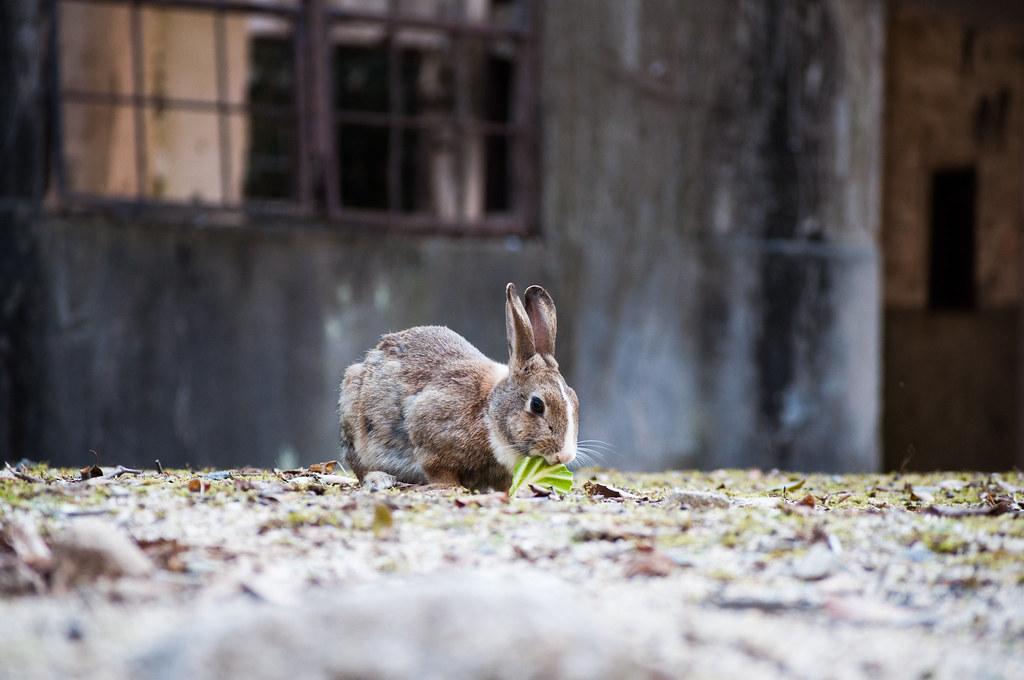 Okunoshima(Rabbit Island)