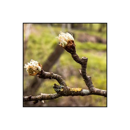 Vive le printemps #5