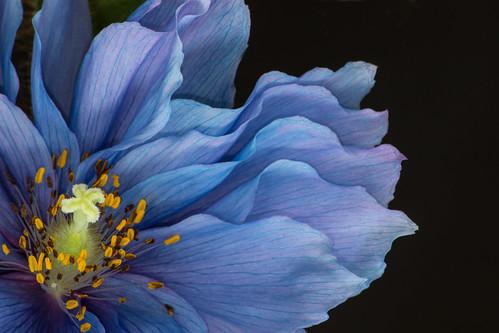 Flower  [Explored 4/10/16 #14]