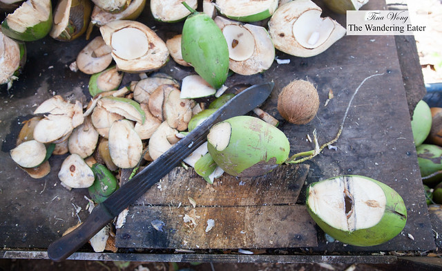 Fresh coconuts hacked open with a machete