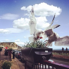 Minding my own cream tea by the seaside, seagulls had other ideas :)