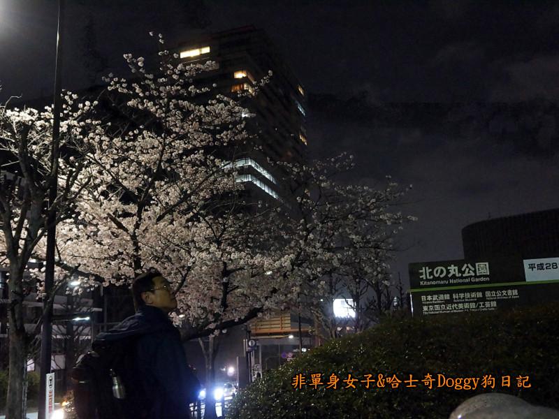 日本東京北之丸公園千鳥之淵賞夜櫻花13
