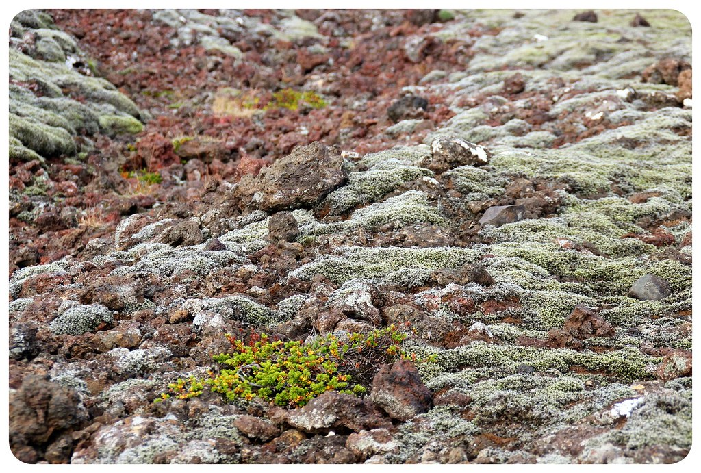 volcanic rock with moss