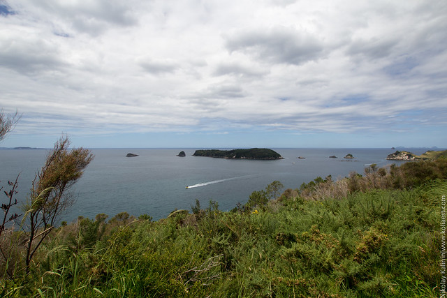 NZ_16-12