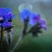 Frühlings Traum by kaerntenfoto
