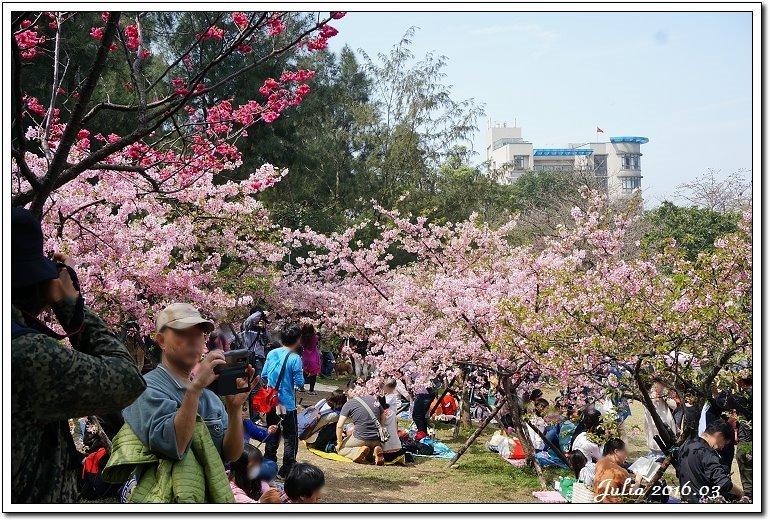 麗池公園河津櫻 (19)