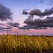 Sky over fields [explored] by daniel_munch