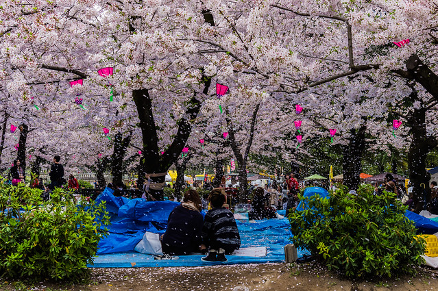 CherryBlossoms_213