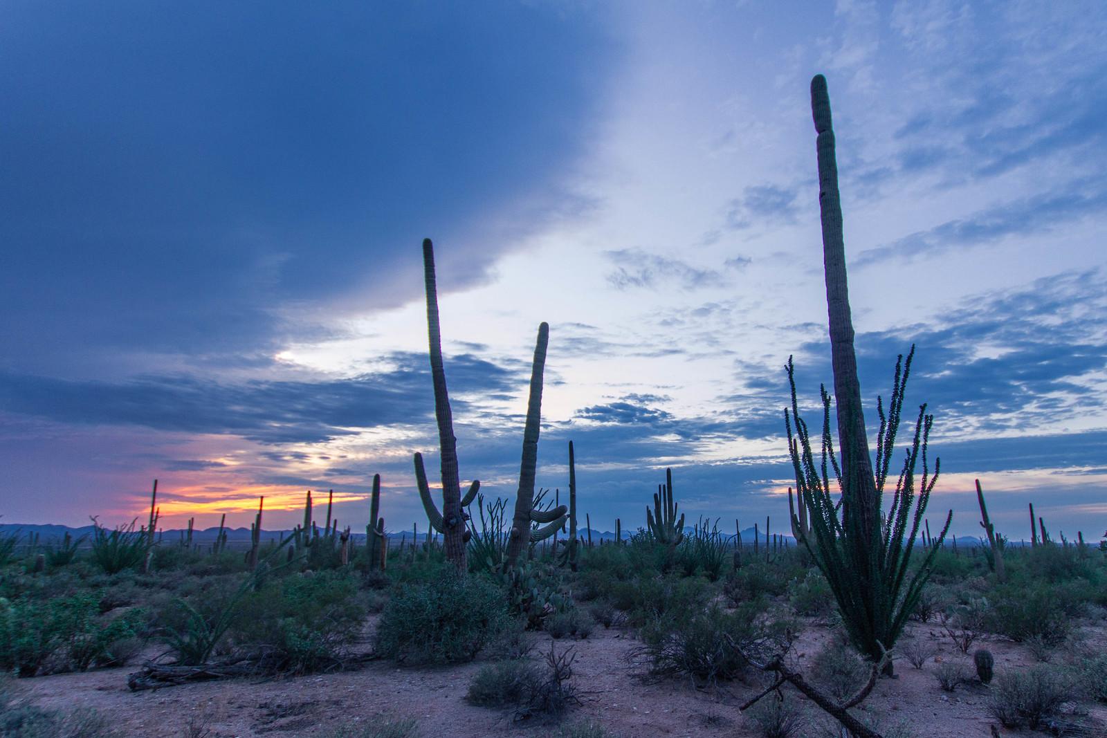 Saguaro-18