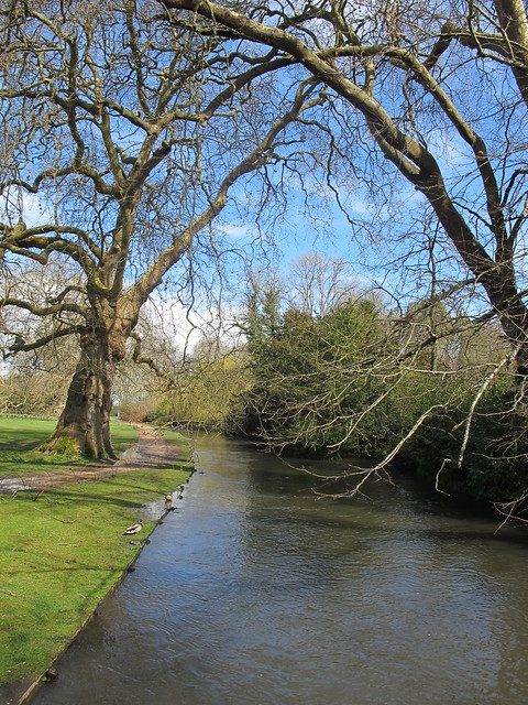 Test River, within Mottisfont Abbey Gardens