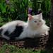 Small photo of Pamuk