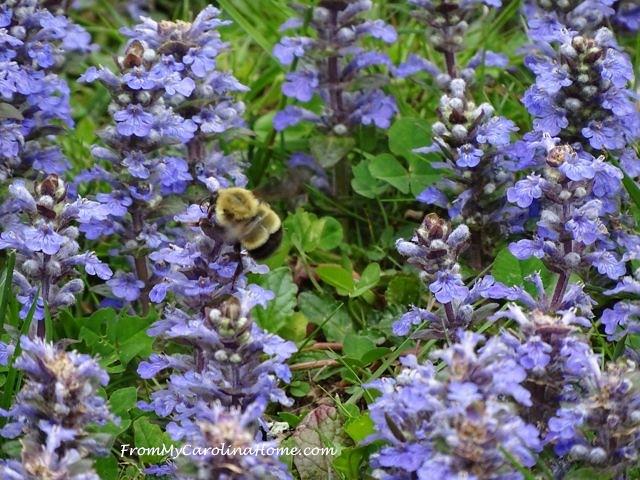April bumble bee