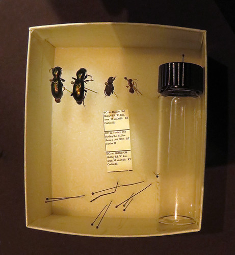 Beetles in a box at the Beaty Biodiversity Museum at UBC, Vancouver