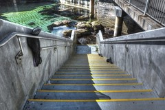 Stairs to the Great Tide Pool