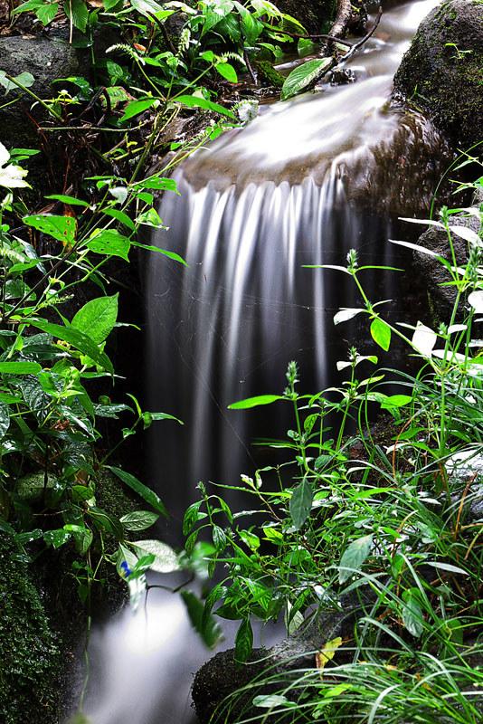 柿田川湧水の写真
