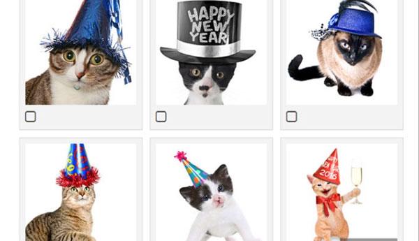 new-years-cat