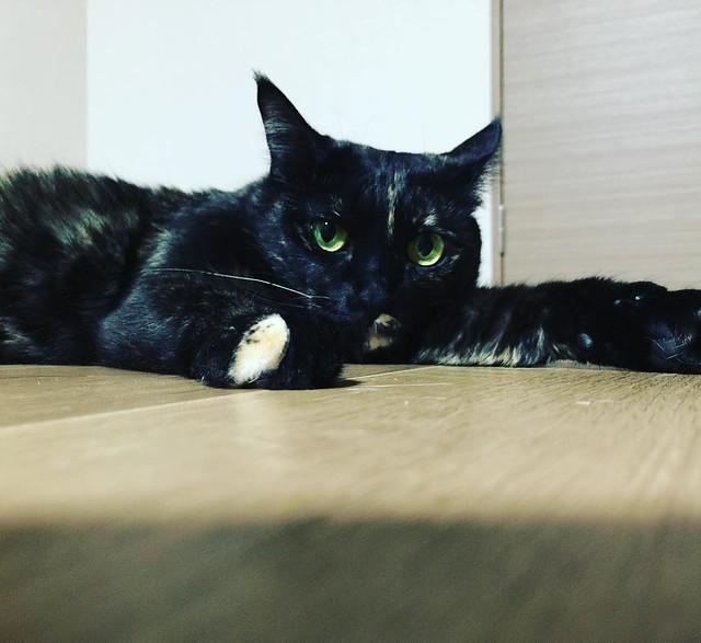 床ペタ😑😑😑 #cat #cats #catsofinstagram #catstagram #instacat #instagramcats #neko #nekostagram #猫 #ねこ #ネコ# #ネコ部 #猫部 #ぬこ #にゃんこ #ふわもこ部
