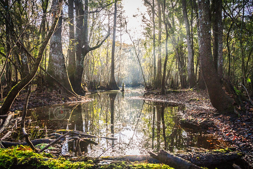 morning us unitedstates florida swamp lightrays cypresstree santaferiver 2015 brooker floridaswamp brycehoover hoovdaddy editjockey december2015 brookerflorida 3clixpix r3v00h3cyr8