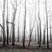 Fog by whatjaimesaid