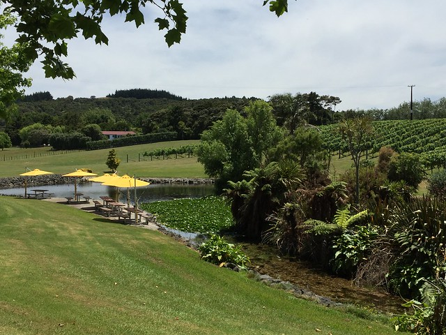 Westbrook Vineyard