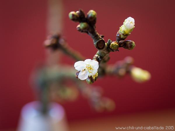 Erste Kirschblüte