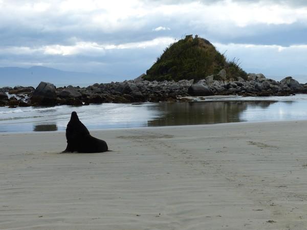 Monkey Island en arrière plan