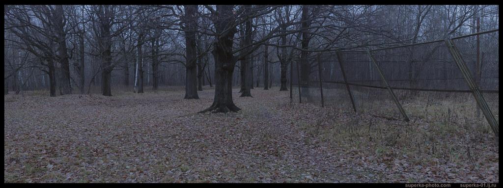 Park trees Pano 04-04_2K0000