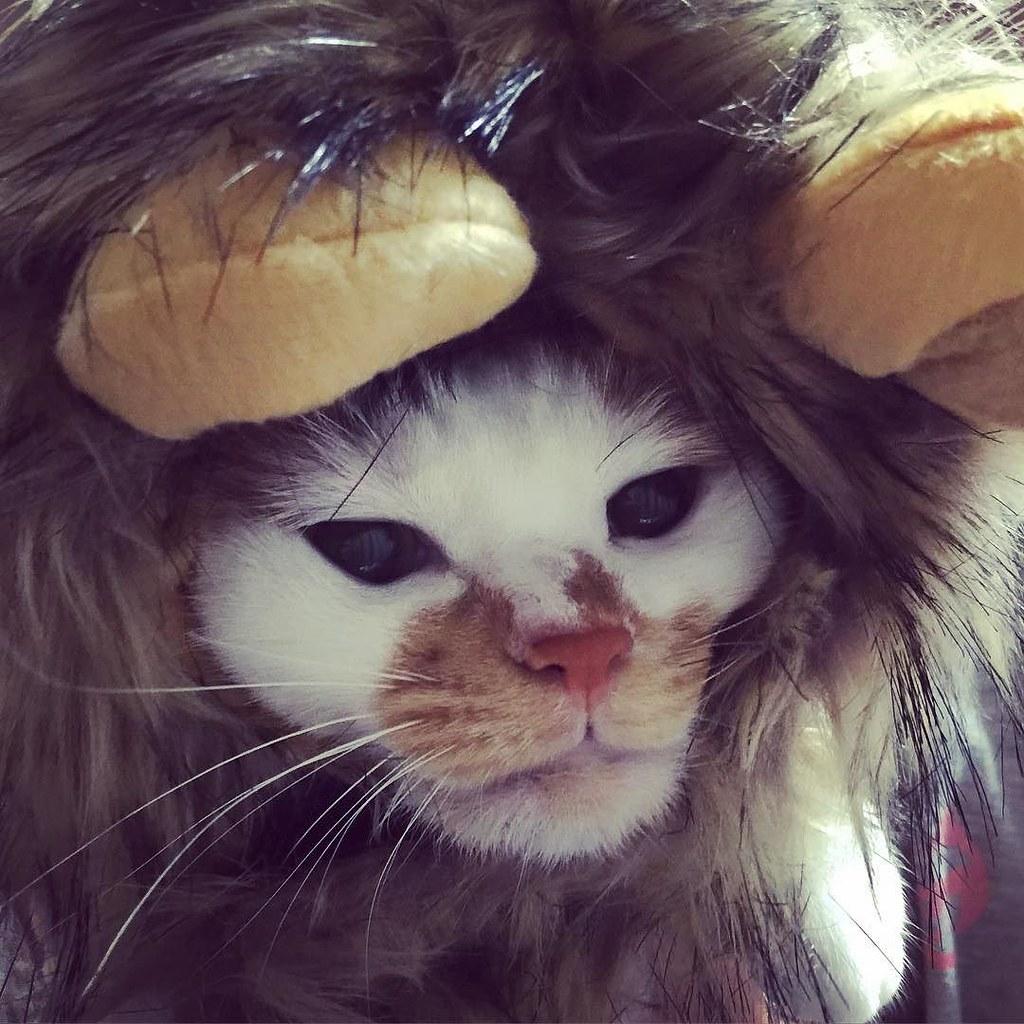 いやいや #cat #cats #catsofinstagram #catstagram #instacat #instagramcats #neko #nekostagram #猫 #ねこ #ネコ# #ネコ部 #猫部 #ぬこ #にゃんこ #ふわもこ部