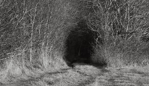 trees nature monochrome denmark