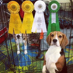 Dylan and his loot!! He got a double Q after his two great Premier runs, but they weren't the fastest. He kinda petered out after Premier but he was happy and stayed in it with me!! Dax ran his little butt off and was super happy, but he did some bonus ob