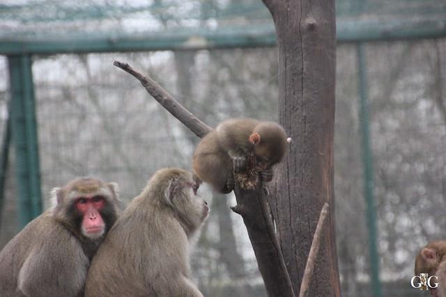 Besuch Tierpark Friedrichsfelde 14.02.201647
