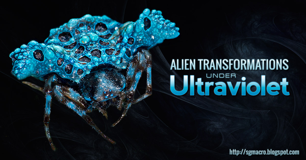 Alien Transformations Under Ultraviolet