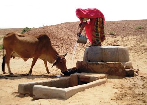 मानव और पशु दोनों के लिए पानी का संरक्षण जरूरी है