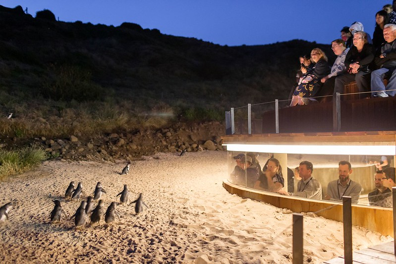 penguin viewing