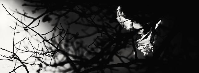Noir ghost.