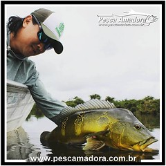 Lawrence Ikeda do Biopesca. O tucunaré é de longe o peixe mais procurado no Brasil.  #pescaamadora #pesqueesolte #baitcast #pescaesportiva #sportfishing #fishing #flyfishing #fish #bassfishing #bass #angler #snook #fishinglures #lures #amazonia #amazon #f