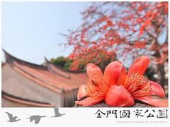 木棉花開(總兵署)-01