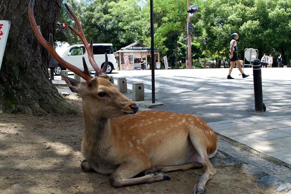 Nara Park_02