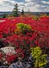 Crimson Blanket