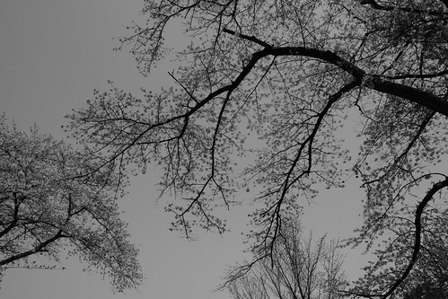 sakura monochrome 6