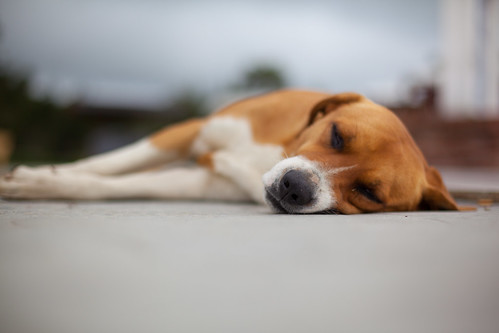 Sleeping Dog, Guatape