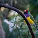 Colourful Bird by neilbruder