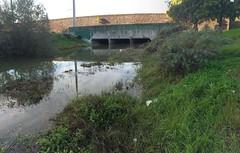 KingTide: Cerrito Creek