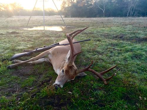 texas hunting deer whitetail