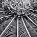 Saga Palm layers by FotoGrazio
