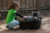 Goat in a Bucket