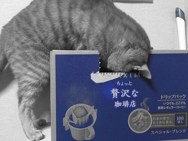 コーヒー箱を漁る猫😅 #cat #cats #catsofinstagram #catstagram #instacat #instagramcats #neko #nekostagram #猫 #ねこ #ネコ# #ネコ部 #猫部 #ぬこ #にゃんこ #ふわもこ部