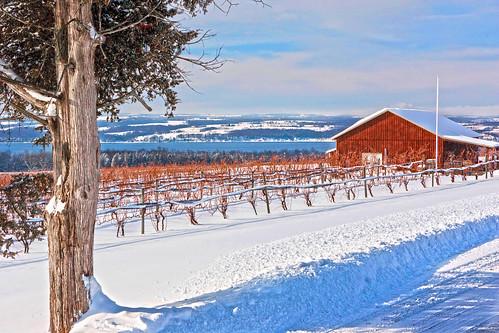 winter lake landscape unitedstates northamerica newyorkstate fingerlakes cayuga cayugacounty flx fingerlakesregion longpointwinery