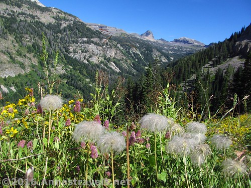 Wildflowers overlooking Alaska Basin along the Stairway to Heaven Trail, Jedediah Smith Wilderness and Grand Teton National Park, Wyoming
