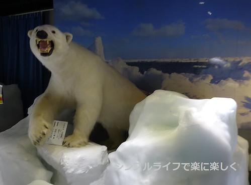 紋別、流氷センター・シロクマ剥製